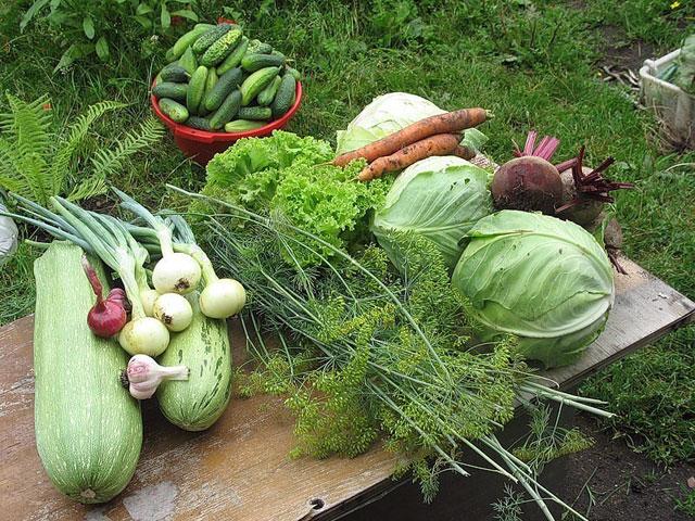 Садоводство и урожай
