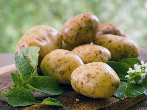 Молодой картофель с июля и до октября