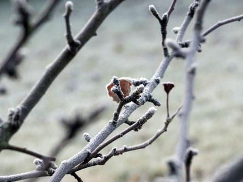 Заморозки в весеннем саду