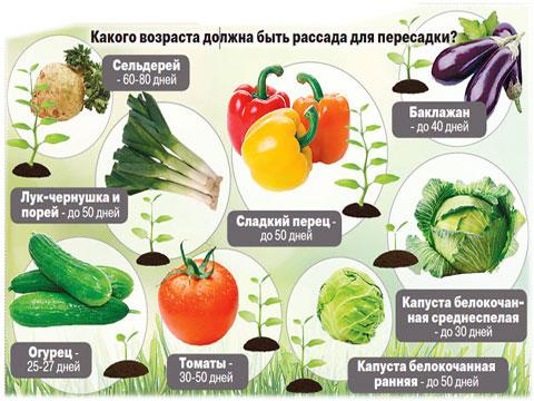 Огородный орднунг: не спеши!