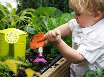 Что сажать и как сажать на своем участке начинающему садоводу