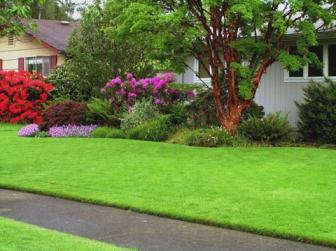 Как выбрать почву и траву для газона, подробная инструкция