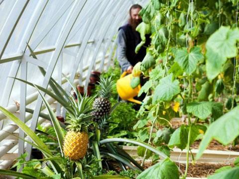 Выращивание экзотических культур в теплицах