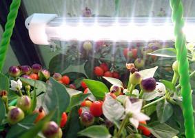 Светильник для растений «Оптимум-15»_1