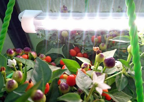 Светильник для растений «Оптимум-15», фото 2